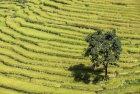 nepal.tilicho.naar.phu.annapurna.4