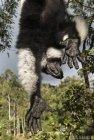 lemurien.madagascar.10