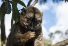 lemurien.madagascar.11