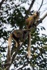 lemurien.madagascar.14
