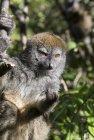 lemurien.madagascar.17