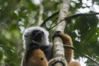 lemurien.madagascar.2