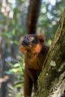 lemurien.madagascar.21