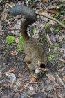 lemurien.madagascar.24