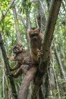lemurien.madagascar.26