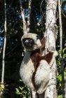 lemurien.madagascar.28
