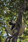 lemurien.madagascar.32