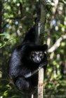 lemurien.madagascar.37
