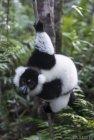 lemurien.madagascar.9
