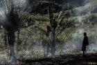madagascar.corridor.forestier.trek.175