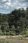 madagascar.corridor.forestier.trek.184