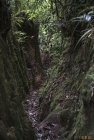 madagascar.corridor.forestier.trek.31