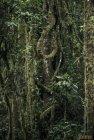 madagascar.corridor.forestier.trek.59