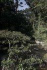 madagascar.corridor.forestier.trek.63