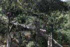 madagascar.corridor.forestier.trek.96
