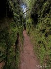 corridor.forestier.trek.madagasar.72