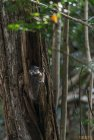 madagascar.trek.tsingy.parc.national.bemaraha.15