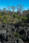 madagascar.trek.tsingy.parc.national.bemaraha.27