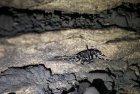 madagascar.trek.tsingy.parc.national.bemaraha.40