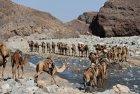 ethiopie.danakil.afar.caravanes.1