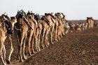ethiopie.danakil.afar.caravanes.18