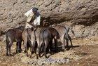 ethiopie.danakil.afar.caravanes.29