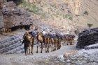 ethiopie.danakil.afar.caravanes.42