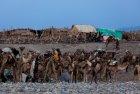 ethiopie.danakil.afar.caravanes.9