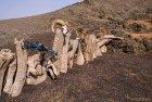 mongolie.gobi.sud.trek.28