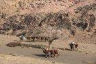 mongolie.gobi.sud.trek.31