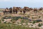 mongolie.gobi.sud.trek.47