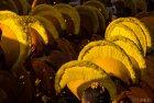 bodnath.boudhanath.2016.katmandou.ceremonie.ceremony.earthquake.49