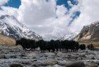 ladakh.nubra.trek.inde.33