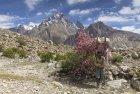 baltoro.gondogoro.trek.k2.braod.peak.mitre.gasherbrum.pakistan.boiveau.laurent.10