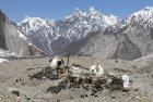 baltoro.gondogoro.trek.k2.braod.peak.mitre.gasherbrum.pakistan.boiveau.laurent.30