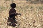 ethiopie.simien.champs.11