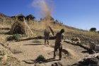 ethiopie.simien.champs.16