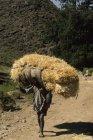 ethiopie.simien.champs.23