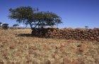 ethiopie.simien.champs.26