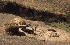 ethiopie.simien.champs.27