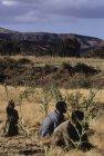 ethiopie.simien.champs.29