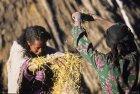 ethiopie.simien.champs.4
