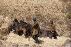 ethiopie.simien.champs.5