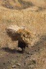 ethiopie.simien.champs.8