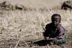 ethiopie.simien.champs.9