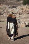 ethiopie.simien.portrait.7