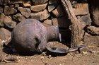 ethiopie.simien.adi.arke.29