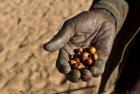 tchad.ennedi.koboua.20
