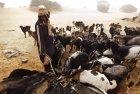 tchad.ennedi.koboua.43