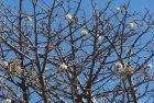 madagascar.baobab.mangoky.17